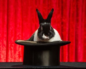 Oreo-The-Magic-Rabbit